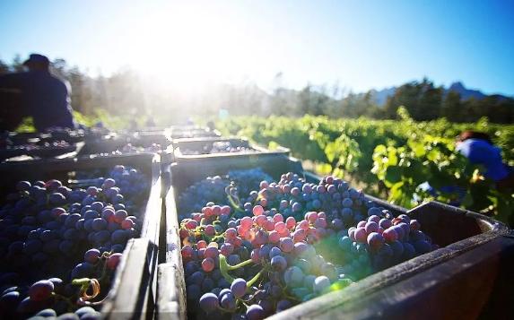 刚怼完中国又碰瓷欧盟,美拟对欧盟葡萄酒征收100%关税