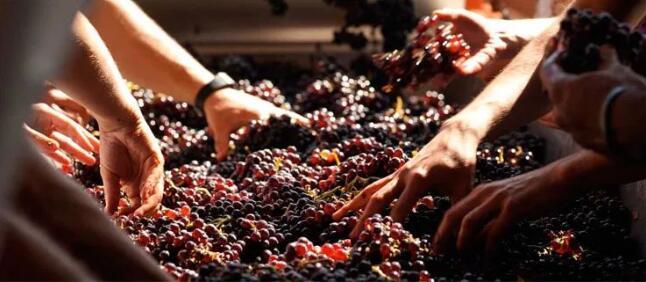 2030年欧盟葡萄酒生产量将下降0.5%