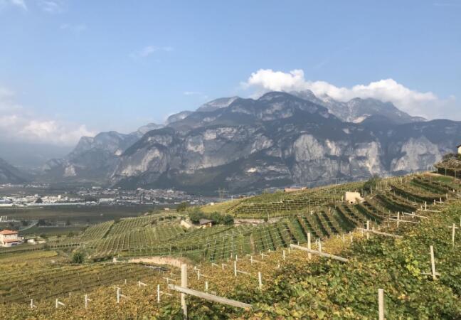 意大利农学家研发对葡萄园潜力的评价体系