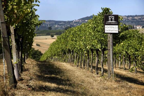 意大利翁布里亞葡萄酒產區風土指南