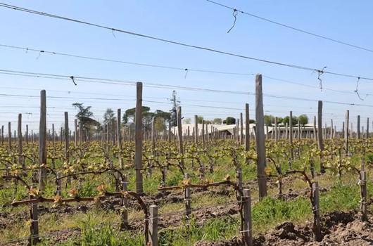 波爾多兩個產區葡萄酒品質再好,也無法賣出好價格