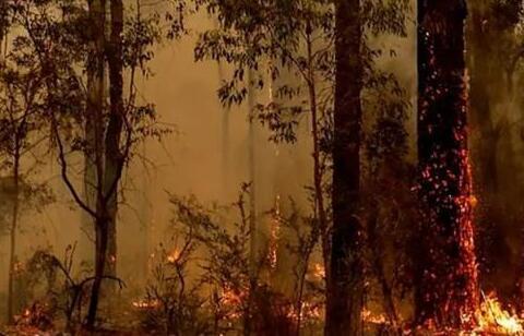 澳洲葡萄酒产业受到山火影响,实际损失尚未明确