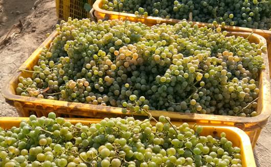 中國釀酒行業2019年全年總產量達5590.13萬千升