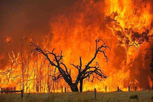 澳洲森林大火会对中国葡萄酒市场产生什么影响?
