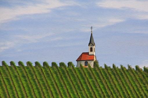 目前我国主要的葡萄酒产区是有哪些呢?各产区有什么特点?