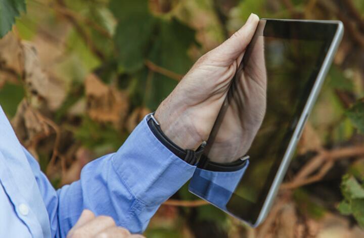 澳洲建立数字葡萄园指导系统 为澳洲葡萄酒行业带来更优成本