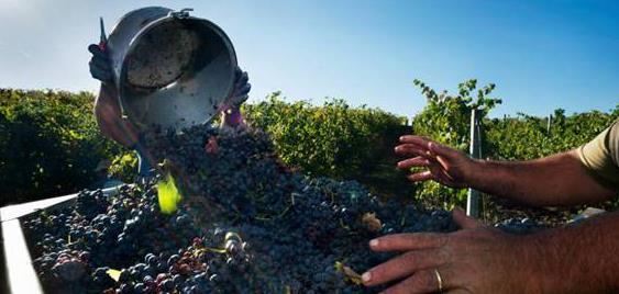 意大利有机葡萄酒酒庄:Mottura酒庄