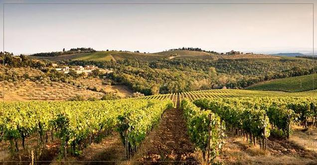意大利有机葡萄酒的独特之处