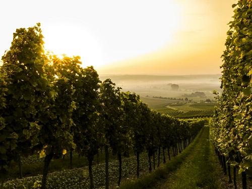 旧世界葡萄酒主要国家有哪些?