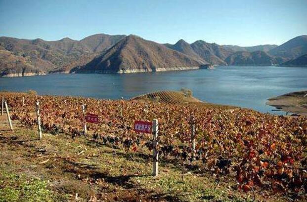 集安鸭绿江河谷——中国山葡萄冰酒顶级产区