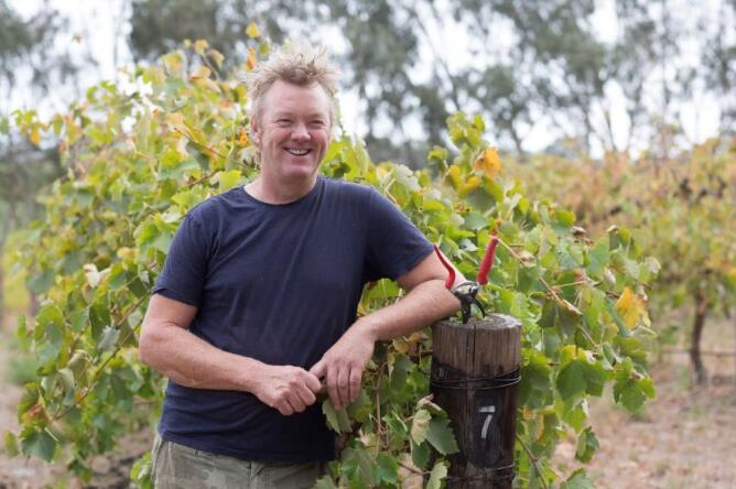 澳大利亚都度酒庄2020年采收季来了