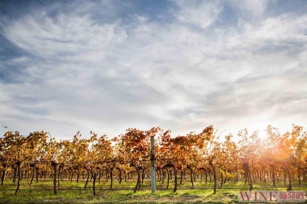 澳大利亞另一邊的葡萄酒