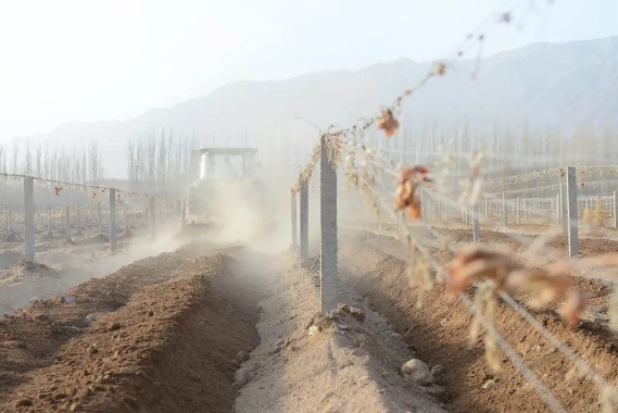 """中国葡萄酒供应稳定优势""""凸显""""!酒商:是时候考虑做本土品牌了"""