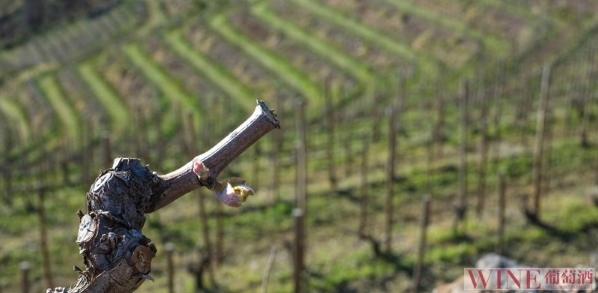 自然之味,西班牙自然酒
