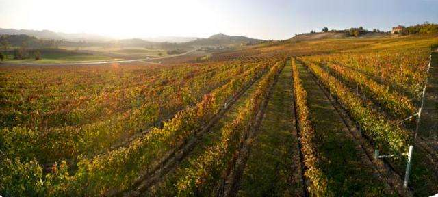意大利维埃蒂酒庄推出白葡萄酒