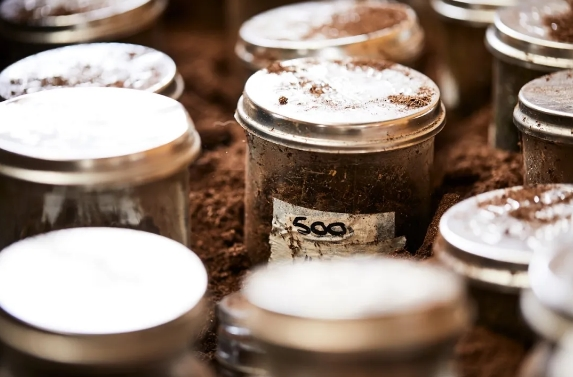 生物动力法+澳洲C位,双风口助力宝石树酒庄收获更多成熟消费者