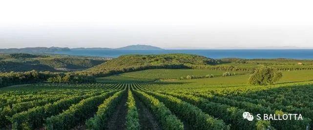 意大利Bolgheri葡萄酒产区酒庄介绍
