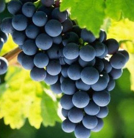 奧地利茨威格紅酒特點是什么?