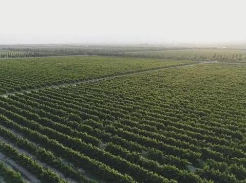 宁夏贺兰山东麓葡萄酒产业获得2645万元国家重点专项支持