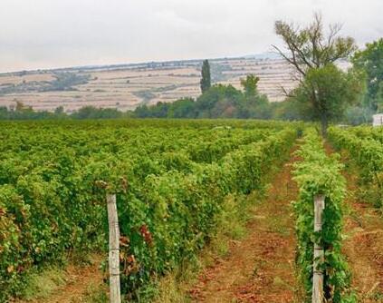 保加利亚农业部出台政策扶助葡萄种植产业