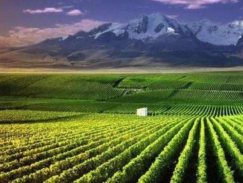 宁夏贺兰山东麓葡萄酒荣登2020中国品牌价值评价区域品牌榜第10位