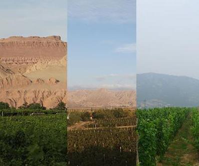 全国政协委员建议西部欠发达地区应该大力发展葡萄酒产业