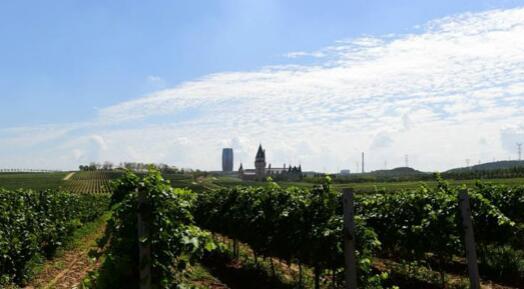 意大利米兰投资银行发布葡萄酒行业报告