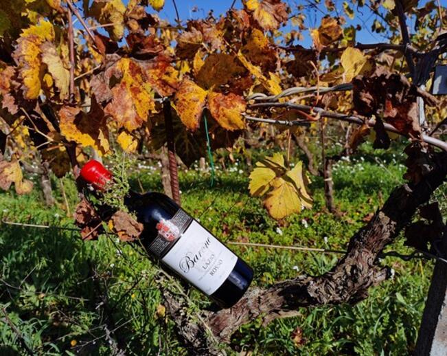 嘉盛酒业 | 当火山岩与葡萄酒相遇,意想不到的事情发生了...