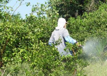 普罗旺斯酿酒师向葡萄喷洒农药,遭遇步枪袭击