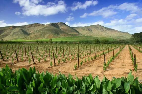 不懂南非葡萄酒的人,怎能说懂红酒 | 厘米贸易招商代理