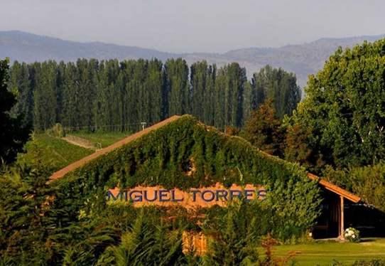 智利桃乐丝酒庄计划推出第一款橙色葡萄酒