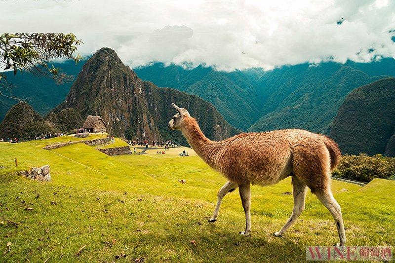 多彩的秘鲁,芬芳的皮斯科