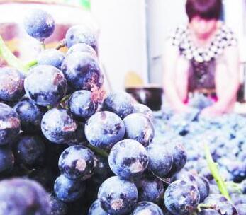 齐齐哈尔市民不再热衷自酿葡萄酒