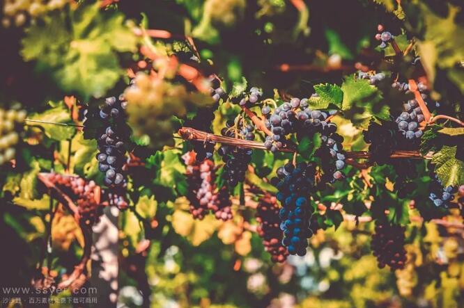 涨知识!论各种水域对葡萄酒品质的影响