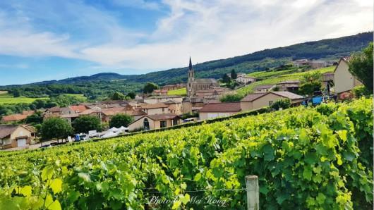 法国勃艮第产区新增22个一级园