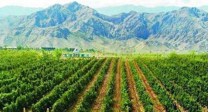 山东省农业科学院(胶东)葡萄产业技术研究院举行揭牌仪式