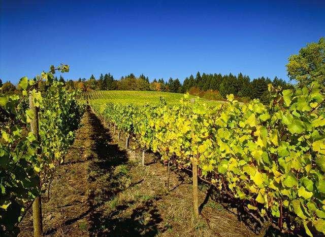 最新调查:40%消费者对葡萄和葡萄酒酿造感兴趣