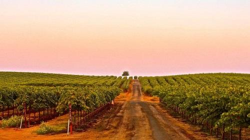 美国葡萄酒非交易性增长17.4%