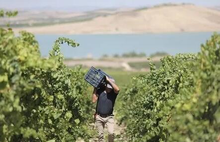 意大利酿酒师及酿酒技术协会呼吁政府提高蒸馏法案补助标准