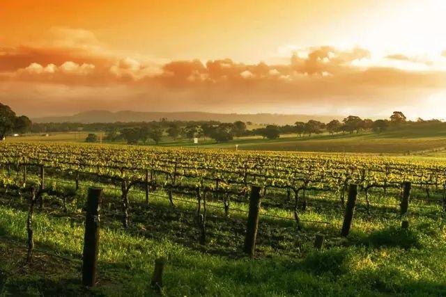 Rootdown Wine Cellars拥有者以270万美元购买葡萄酒产区