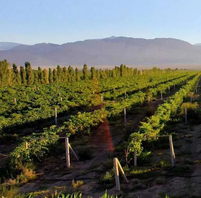 新疆物流恢复,葡萄酒运输重启,但中秋生意受影响