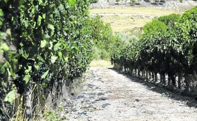 迫于库存压力,杜罗河岸法定产区计划减产20%