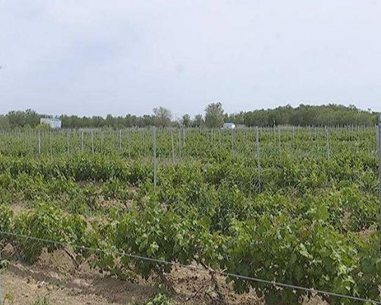 全球首家区块链赋能葡萄酒与烈酒项目在新疆大唐西域酒庄启动