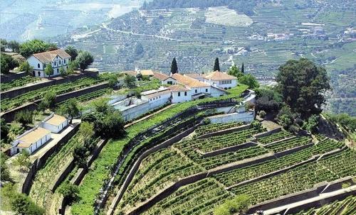 葡萄牙飞鸟酒庄在英国市场推出白葡萄酒