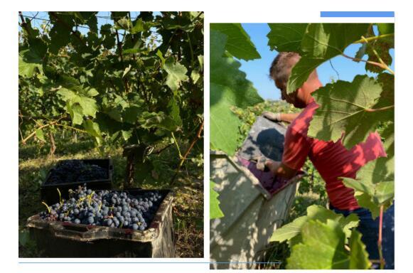2020年意大利葡萄酒总产量将达到47.2亿升