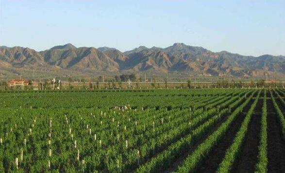 新疆昌吉州打造丝路葡萄与葡萄酒产业经济带