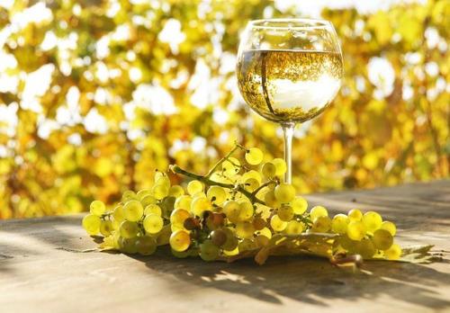 家庭投资收藏葡萄酒要注意点什么
