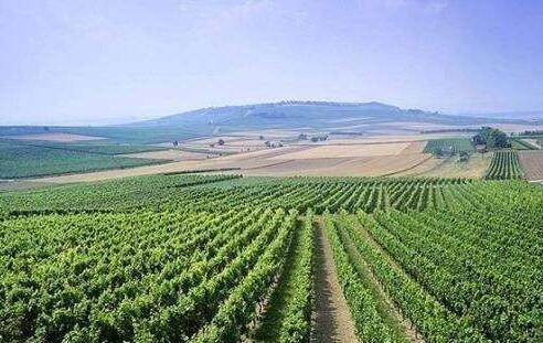 第二十一届中国秦皇岛(昌黎)国际葡萄酒节日前开幕