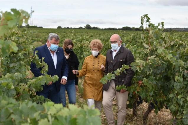 卡斯蒂亚莱昂自治区葡萄产量预计创历史新高