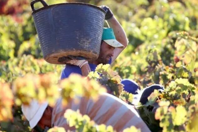 卡斯蒂利亚-拉曼恰农业食品合作社提出稳定葡萄酒市场措施